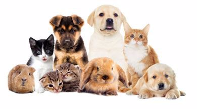 Picture for category Pet Mania
